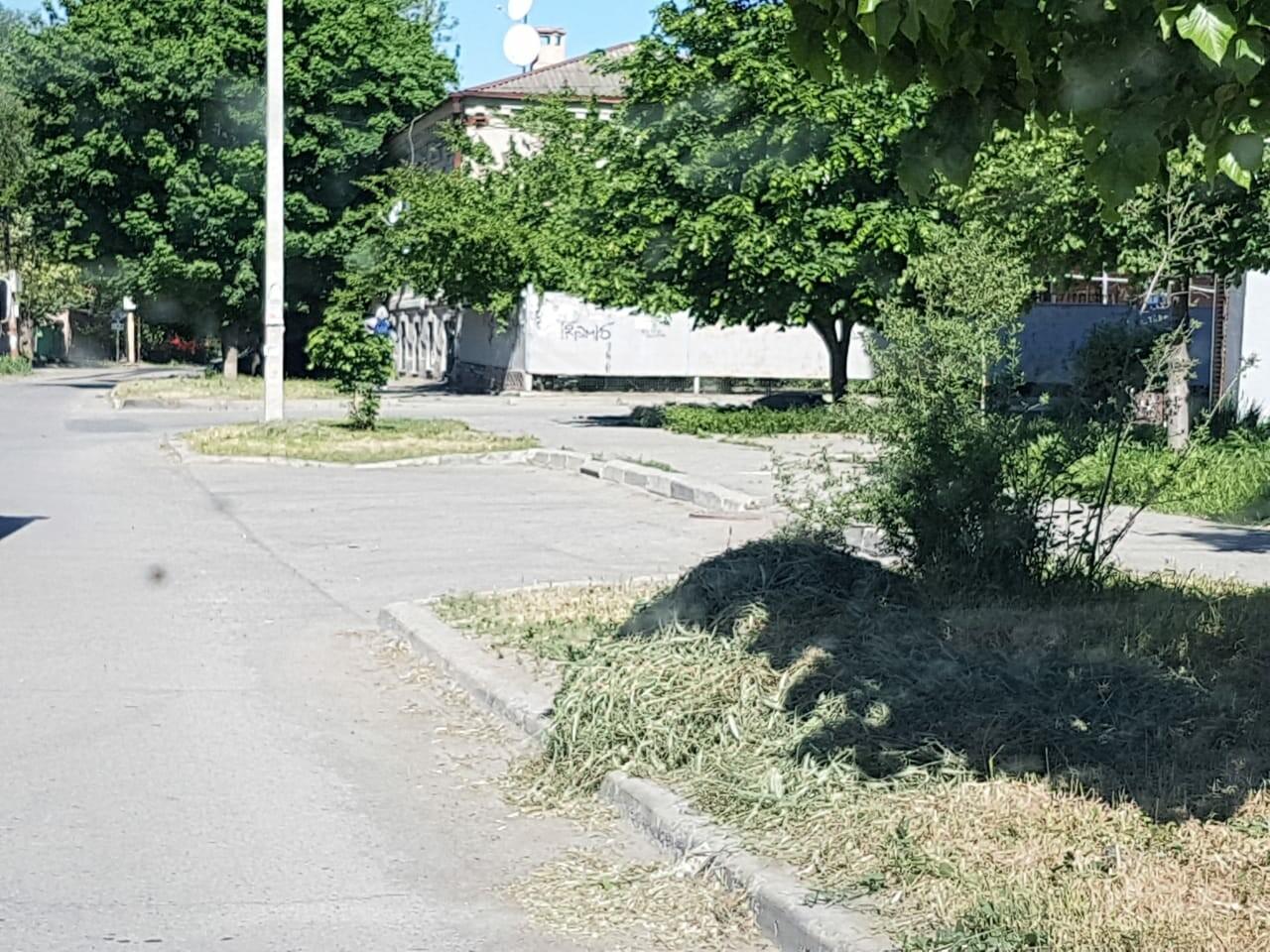 В Таганроге пыль с обочин дорог прячут в некошенной траве на газонах, фото-1