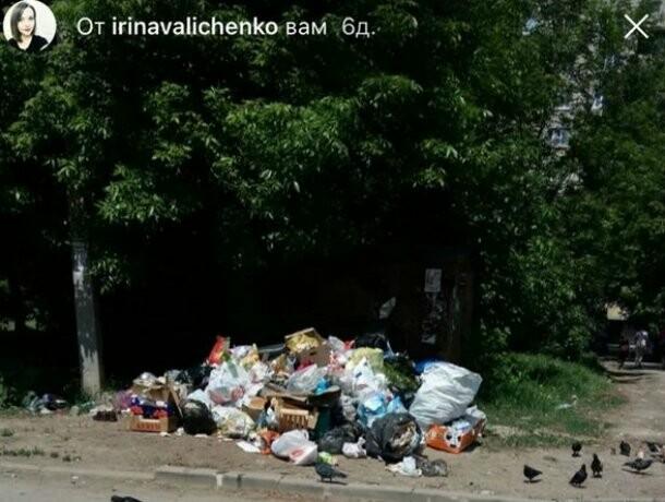 Улицы Таганрога утопают в мусоре, фото-3